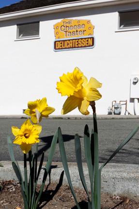 Daffodil-Cheese-Taster-5090.jpg