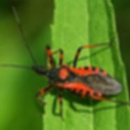 Böcek Kovucu Cihaz