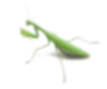 mantis-png-mantis-png-1000_838.png
