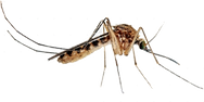 mosquito-300x150_edited.png