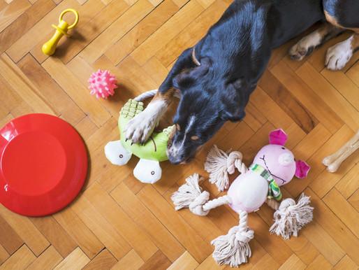 Importância dos brinquedos para pets