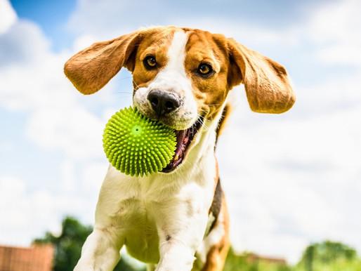 DayCare e Creche para cães: Você conhece essa nova tendência?
