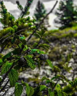 leaves green in brek