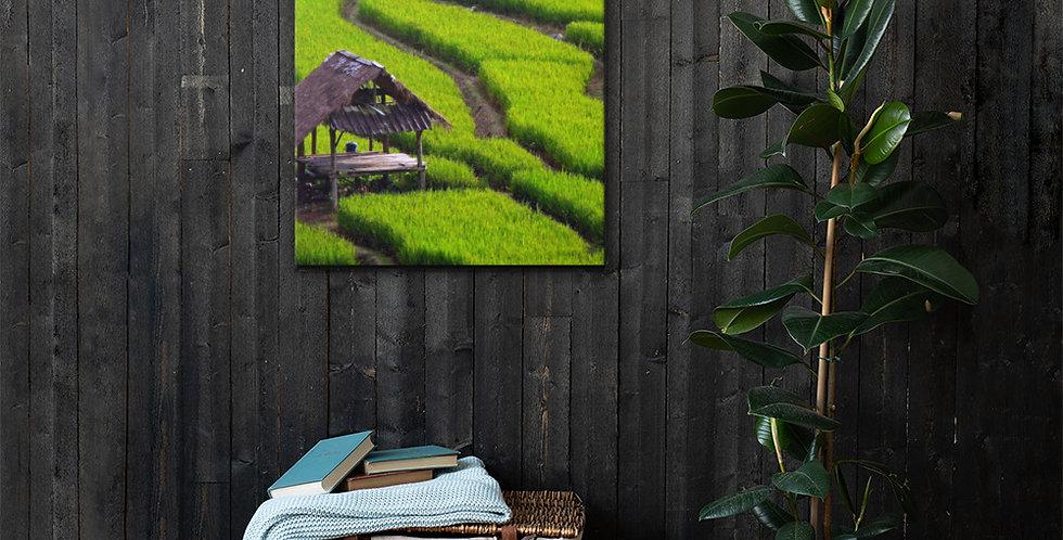 Canvas: Green Terraced Rice Field