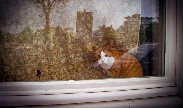 Cat behide the window - Amsterdam, The Netherlands