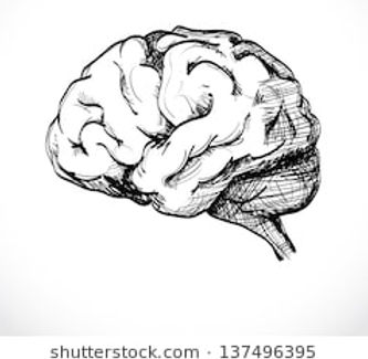 isolated-human-brain-sketch-illustration