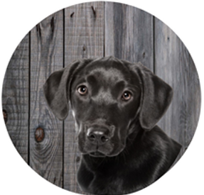 Icon dog.png