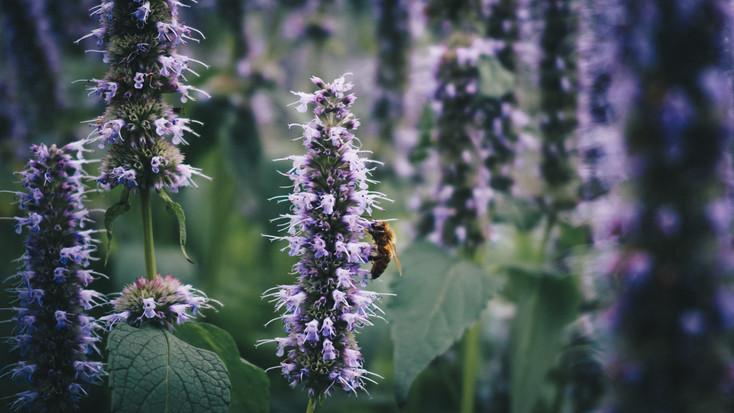 Bee-1.jpg
