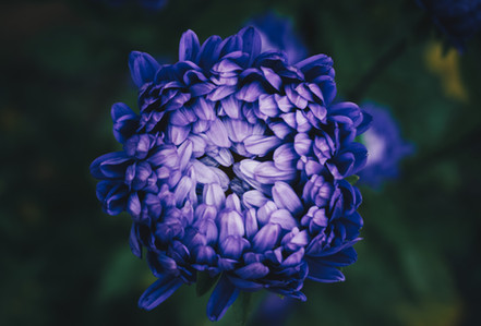 FLower_purple-1.jpg