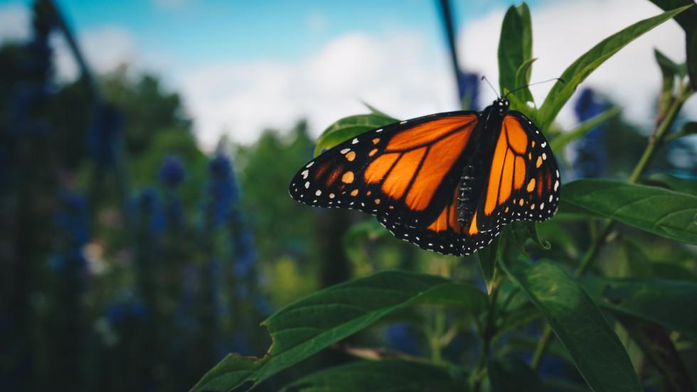 Butterfly-23.jpg
