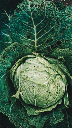 Lettuce-23.jpg