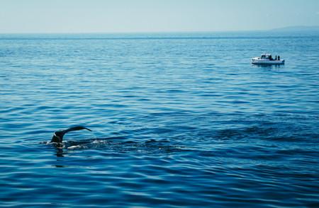 Whale-1.jpg