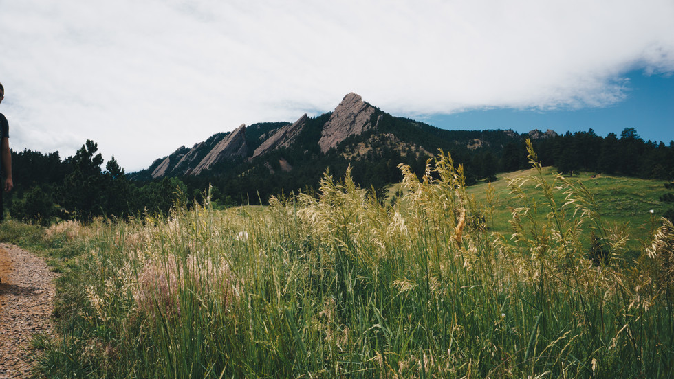 Boulder_jay-1-8.jpg