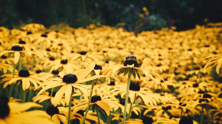 Bee-3.jpg