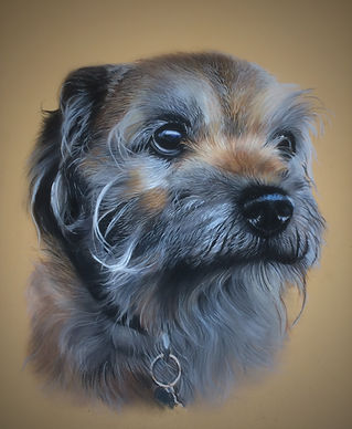 Border Terrier Pet Portrait