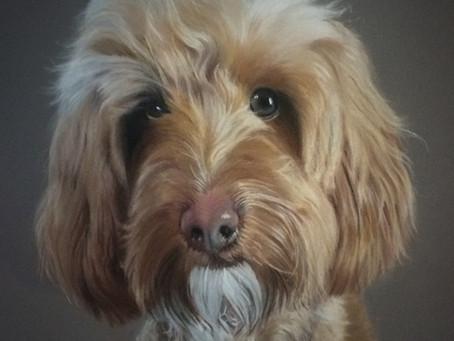 #Pastelmat #Drawing #Petportraits