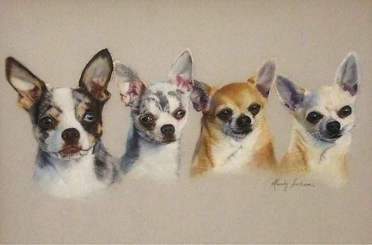 chihuahuas Pet Portrait