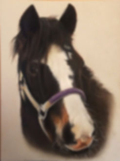 Horse pastel Pet portrait