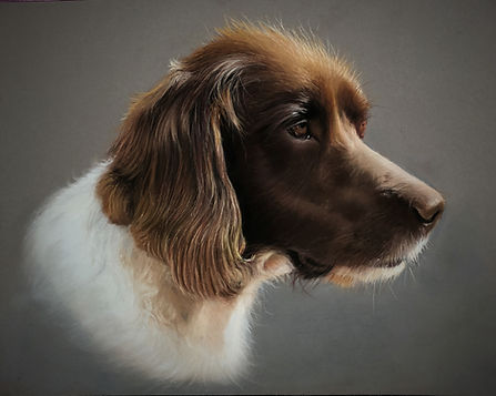 Pet Portrait in pastel