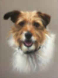 Terrier pet portrait