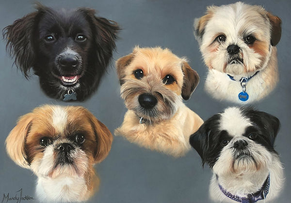 Family of dogs pet portrait