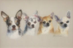Chihuahua family pet portrait