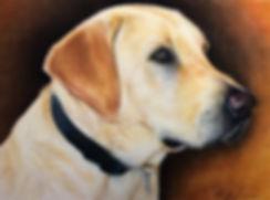 Labrador pet portrait