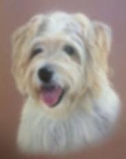 Pet Portrait in pastel