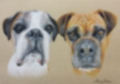 Boxer Dogs Pet Portrait