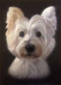 Highland Terrier portrait in pastel