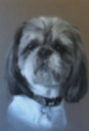 Shih Tzu pet portrait