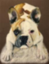 Bulldog pet portrait