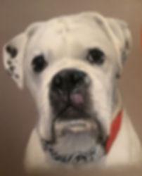 White boxer Pet Portrait