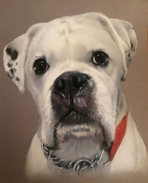 White boxer Pet Portrait