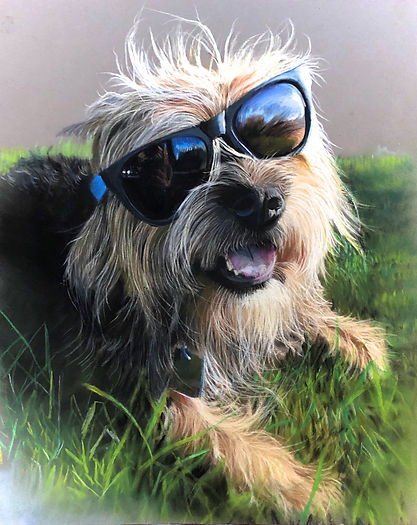 Pet portrait in pastels
