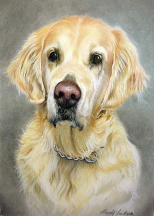 Retriever pastel portrait