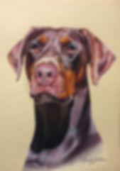 Doberman pet portrait
