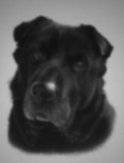 Sharpador Pet Portrait