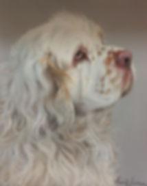 Clumber Spaniel pt portrait