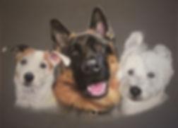 Trio Pet Portrait
