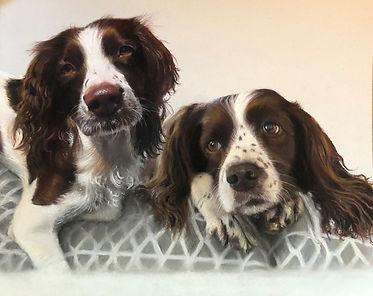 Springer Spaniels Pet Portrait