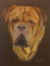 Dougue De Bordeaux pet portrait