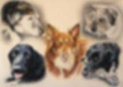 Family Pets Portrait