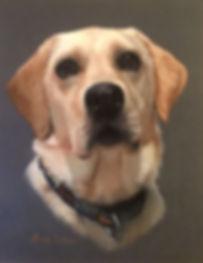Golden Labrador portrait
