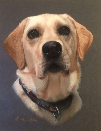 Golden Labrador portrait