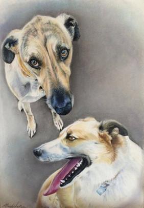 Dogs pastel portrait