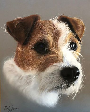 Parsons Russell Terrier Pet Portrait