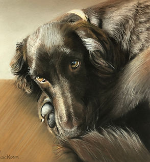 Spaniel Pet Portrait