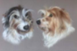 Jack Russell pet portrait