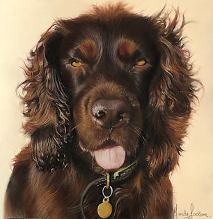 Spaniel pet portrait